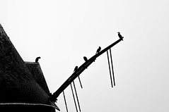 The Birds (Kirmatic) Tags: windmill sail birds black white sony nex6 sel55210 roof