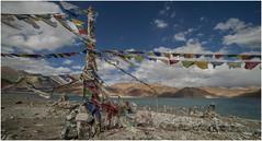 pangong tso lake014 (Fermin Ezcurdia) Tags: pangonglake tibetan himalaya shyokriver indusriver tso changla 4250 pangongtso pangongtsolake chemreymonastery hemismonastery lehpalace somagompa namgyaltsemogompa shantistupa sheymonastery staknagompa thiksemonasterymonastery thikse stakna gompa shey stupa shanti soma namgyal leh hemis chemrey ladakh