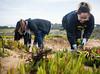 MLK Day of Service 2018   Fort Funston (Parks Conservancy) Tags: 2018 activity flickr fortfunston mlkday volunteering volunteers