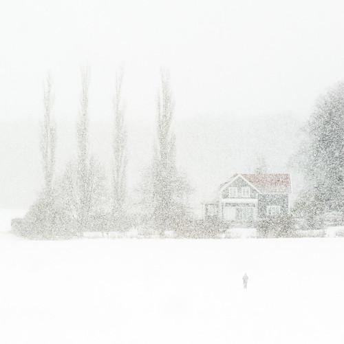 Skidåkare i snöyra