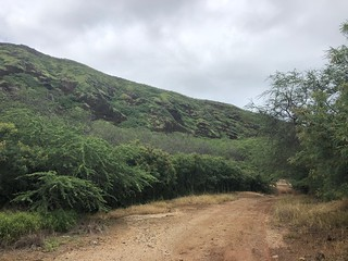 Picture from the Koko Crater Botanical Garden