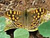 Spanish Butterfly! ('cosmicgirl1960' NEW CANON CAMERA) Tags: spain ojen andalusia costadelsol espanalifeyabbadabbadoo