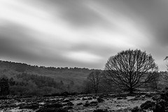 Devil's Punchbowl (ed027) Tags: ifttt 500px mist trees line landscape sunrise fog sunset nature contrast sun tree beautiful natural black white grass dawn mood lines moody long exposure devil bowl mono grassland boulevard country road woodland sky horizon over land copse