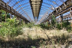 Old factory hall (Hooismans) Tags: abandoned italy italia italian derelict decay decaying peeling paint paintchips ruins modern green greenhouse garden nature takes over natur natural window windows summer ornate yellow white wood ruinas light daylight sunlight shadows sunny interior indoors indoor home house villa travel trip texture textures detail details europe european art arte architecture old classic digital rural serene peaceful