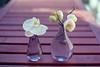 film (La fille renne) Tags: film analog lafillerenne canonae1program 35mm 50mmf18 kodak kodakproimage100 summer flowers