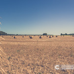 Straw bales at the Pays de la Loire, France. Hay bales on the field after harvest thumbnail