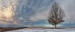 8R9A0644-51PRtzl1RTBbLGER2 (ultravivid imaging) Tags: ultravividimaging ultra vivid imaging ultravivid colorful canon canon5dm3 clouds winter tree twilight scenic sky sunsetclouds evening pennsylvania pa panoramic vista rural fields farm snow