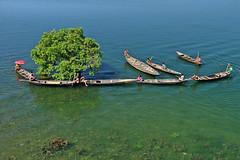 Beautiful Sylhet, Bangladesh (Sabina BD) Tags: tree boat water green sylhet bangladesh beautiful imge