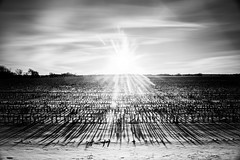 Straight Into The Setting Sun (yorgasor) Tags: nikon nd cornfield ais nikonais28mmf28 sun flare