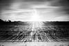 Straight Into The Setting Sun (yorgasor) Tags: nikon nd cornfield ais nikonais28mmf28 sun flare