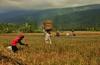 IMG_0464 (Kalina1966) Tags: bali island indonesia people rice field