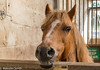 Hello 2 (M C Smith) Tags: horse stable brown white pentax k3 sign green door bars window letters bokeh wall sunlight