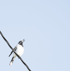 Bird Space (Bron.Wolff) Tags: abstract art bird creative light minimalism nature pale sky space wildlife