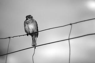 Free as a birdy.