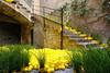 Temps de flors_0199 (Joanbrebo) Tags: girona catalunya españa es tempsdeflors tempsdeflors2017 canoneos80d eosd efs1018mmf4556isstm autofocus greatphotographers