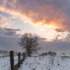 Sunset Tree (Ben_Senior) Tags: ottawa ontario canada nikond7100 nikon d7100 rural bensenior foggy fog mist sun sunset dusk evening color colour colors colours white snow snowy blue purple orange yellow pink red fence fenceposts sky cloud clouds countryside