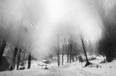 Fog (Ida Di Pasquale (captura65)) Tags: inverno winter strada car macchina neve fog nebbia montagna alberi mountain