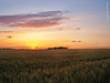 Wheatfield at sunset, 27 May 2017 (photography.by.ROEVER) Tags: kansas shawneecounty topeka midwest wheat field wheatfield farming agriculture landscape evening sunset may usa 2017 may2017