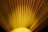lampshade (christikren) Tags: monochrome macromondays yellow light lamp christikren lampshade hmm
