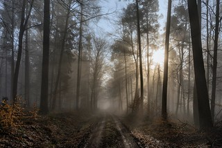 *Wintermorgen im Eifelwald II*