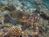 IMG_2716 (Karsten Kretz) Tags: underwater schildkröte turtle malediven maldives