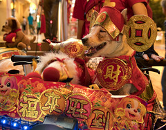 "Auspicious (elenaleong) Tags: yearofthedog chinesenewyear singaporechinatown streetcapture 福来旺到""auspiciousred colour elenaleong redcolour"