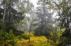 Auf der Knorrsbruch-Halde 01 (zimmermann8821) Tags: knorrsbruch halde deutschland sommer wanderungausflug baum gebüsch natur naturlandschaft pflanze sonne wald waldboden moos zweig waldweg 07349lehesten lehesten thüringen thüringerwald schmiedebachbeilehestenthürwald schieferstadtlehesten schiefer schieferhalde nadelbaum laubbaum