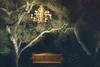 Woodland Dream (~KimVA~) Tags: bench night woodland chandelier