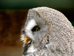 Eule ,Owl (sabine1955) Tags: eule owl tiere animals zootierpark