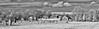 Avebury Panorama (Matt Bigwood) Tags: aveburystonecircle avebury infrared ir wiltshire prehistoric world heritage site nikond100