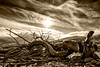 Forgetfulness (B&W HDR) (panos_adgr) Tags: sony a6000 parnitha attica greece travel bw hdr landscape sky clouds sun sunny nature