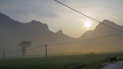 Brzké ráno cestou k čínské hranici (zcesty) Tags: zvířata východslunce vietnam20 strom pole pes mlha krajina hory vietnam dosvěta caobằng vn