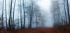 Misty autumn path (Mavroudakis Fotis) Tags: autumn beech forest panoramic tree view background branch colors dawn dramatic dusk ecology environment evening fading fall fantasy fir flora nature outdoors serenity scenery autumnal greece kavala sustainability