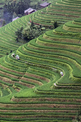Dragon's Backbone (m-blacks) Tags: china cina travel vacation summer august holiday green nature landscape terraces rice canon guanxi longsheng longji lóngjtītián terracedricefields field paddies plants mountain fog clouds hill curves