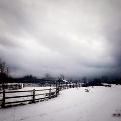 Snowy dog park