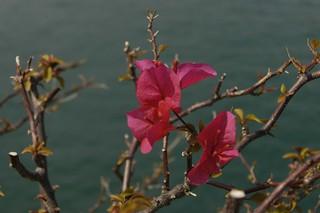flower- shot use  Nikon D100  with  Komura Komuranon 389 38-90mm F3.5 Macro Zoom     Copy of DSC_8207