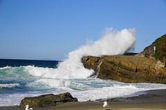 Laguna Beach, California (chad_shahin) Tags: ocean california waves rocks surf tides seag seaguls beach lagunabeach hightide