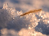 winter hibernation (marianna_a.) Tags: grass snow crystals ice winter macro flora bokeh hbw mariannaarmata