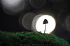 Moon Dance (www.studio360fotografia.es) Tags: pentacon80mm setas valdeinfierno mushroom fungi olympus omd em10 bokeh desenfoque silueta macro moon dance proyector projector 28 fantasia fantasy