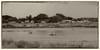 IMG_3491 Clive boats Nik yellowed Edit-2 (roseyposey2009) Tags: clive boats nik yellowed canon m5 clivecloudsboats
