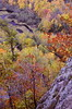 The Wild Upper Peninsula Of Michigan (Laurette Victoria) Tags: autumn fallcolors trees michigan porcupinemountains upperpeninsula