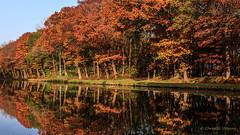 Fall-reflections (cstevens2) Tags: reflection weerspiegeling water kanaal canal ravels belgië belgium belgique autumn fall fallcolours herfst herfstkleuren colourful colours kleurrijk kleuren orange oranje green groen yellow geel trees bomen