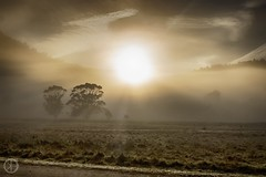 Smoking Morning (kristianoosterveen) Tags: geehi flats kosciuszko national park new south wales australia sunrise mountains mountain tree trees dew fog extraordinary view amazing sun morning early gold glow
