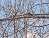 Downy Woodpecker (Wild Bird Company) Tags: downywoodpecker picoidespubescens downywoodpeckercolorado downywoodpeckerboulder wildbirdboulder wildbirdcolorado wildbirdcompany formerwildbirdcenter notwildbirdsunlimited birdseed birdwalk saturdaymorningbirders twinlakes bouldercountyparksandopenspace gunbarrel colorado eileenrutherford