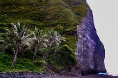 Hawaii-WaipioValley-18.jpg (Chris Finch Photography) Tags: jungle hawaiiphotography waipio taro waipiovalley hawaii landscapephotographs landscapephotography photographs chrisfinch wwwchrisfinchphotographycom chrisfinchphotography utahphotographer tarofarms bigisland tarofarm tropical valley