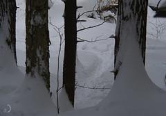 La piste (bd168) Tags: tracks piste hiver snow winterforest trees trail olympus em10markll m14150mm f4056 ii