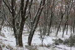Ezkaba1 (isabel muskiz) Tags: arbol tree bosque forest naturaleza nature navarra nieve snow invierno winter