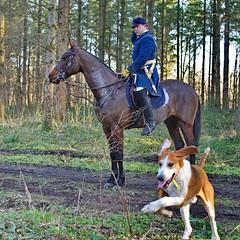 Vénerie (Phil du Valois) Tags: vénerie veneur meute chien forêt domaniale compiègne chasse courre