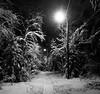 Winter Path (bjorbrei) Tags: winter snow evening night trees track path pathway streetlight streetlights branches kjelsåsmyra kjelsås oslo norway
