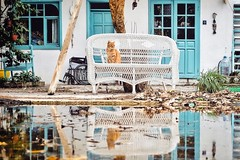 Dogs Are Dead.. (u c c r o w) Tags: cat orange tabby abandoned swimming pool villa windows window kedi katze uccrow selimiye marmaris animal reflection water historic blue house light garden